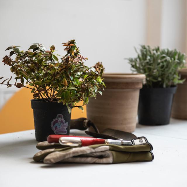 Corso di giardinaggio a Milano